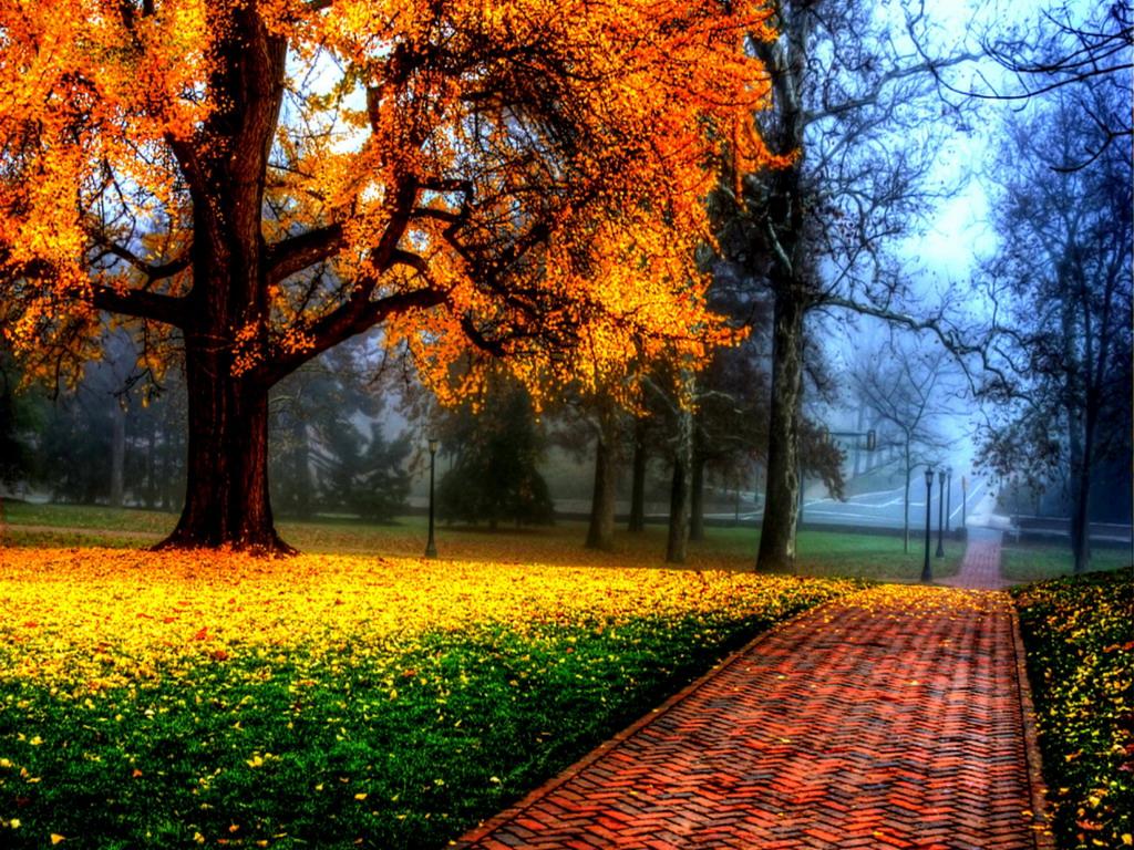 Autunno poesie immagini video frasi filastrocche ricette for Sfondi autunno hd
