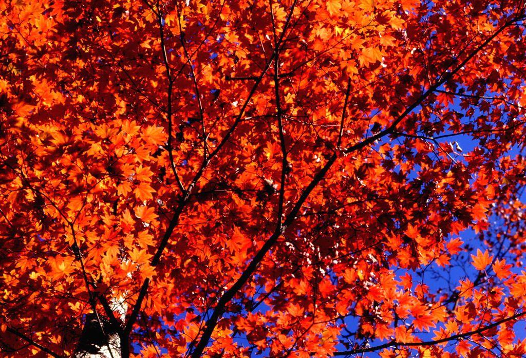 Fiori giardini alberi d 39 autunno for Foto per desktop gratis autunno