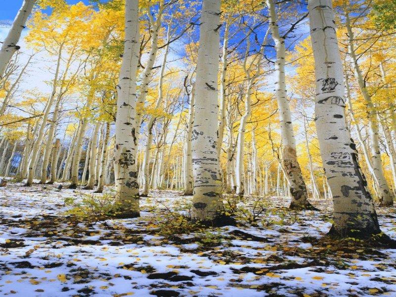 Inverno poesie immagini gif frasi pensieri filastrocche for Immagini inverno sfondi